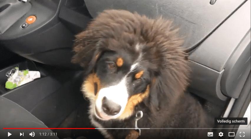 IrisScan | Het lijkt zo simpel: even de hond uitlaten